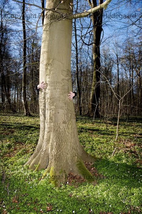 Træ-ndsætter