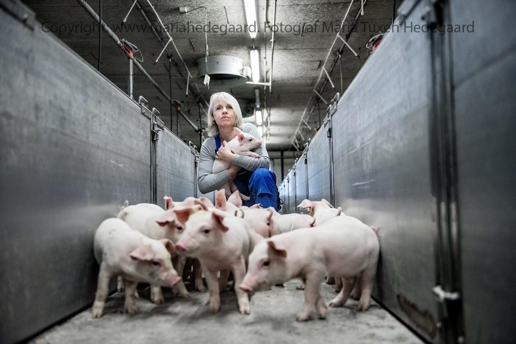 Berith Nissen er næstformand i sønderjysk landboforening. De har set en del konkurser i foreningen. Selv mærker hun og manden på deres gård, hvor de har gæld for 50-100 mio kr, at der er mange omkostninger. (Børsen)