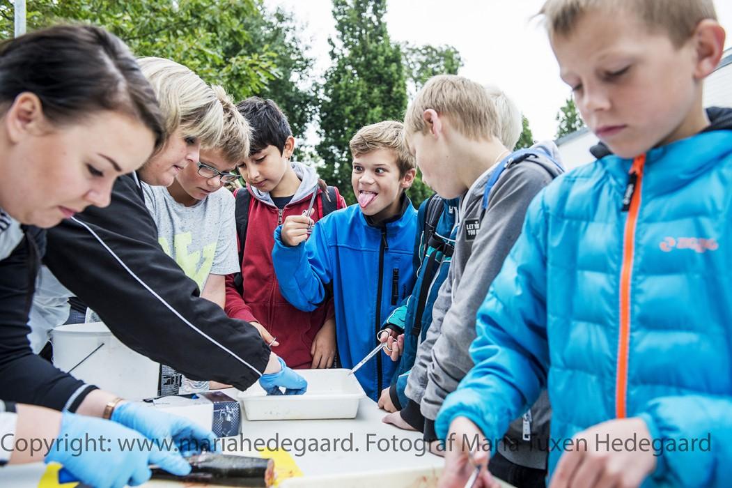 1300 elever fra Haderslev og Aabenraa er til naturvidenskabsfestival. (JydskeVestkysten)